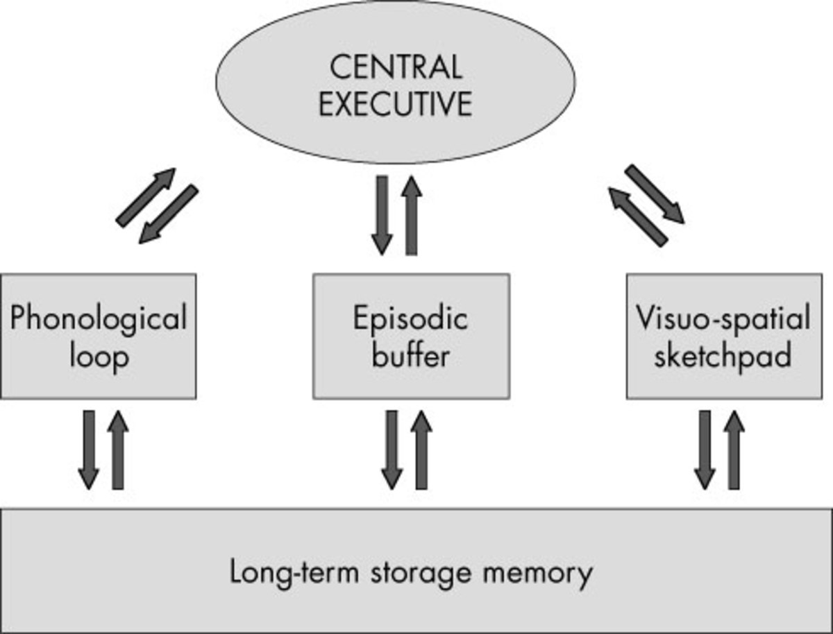 The Working Memory Model (WMM)