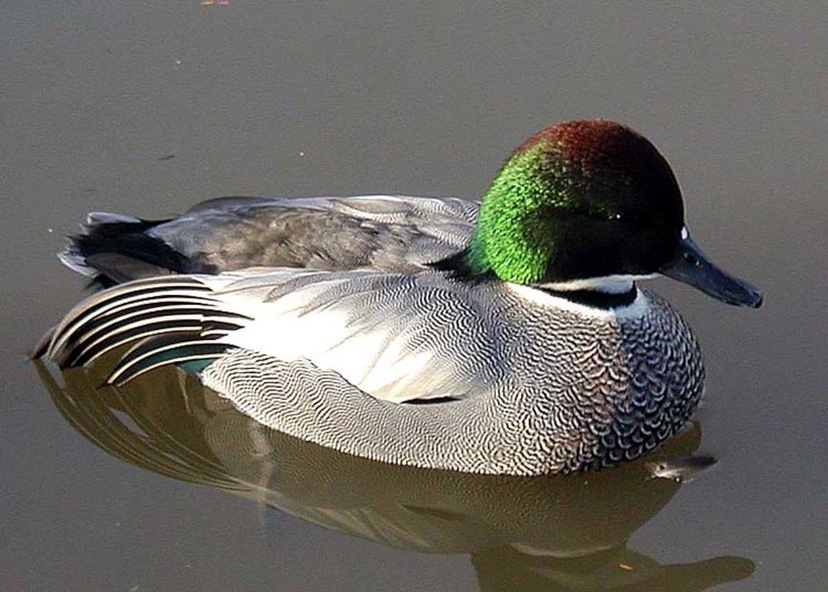 gods guidance through life in the poem to a waterfowl by william cullen bryant I made my choice one fall when a guidance director told me i was  by william cullen bryant in to a waterfowl  to go in his life the poem amplifies.