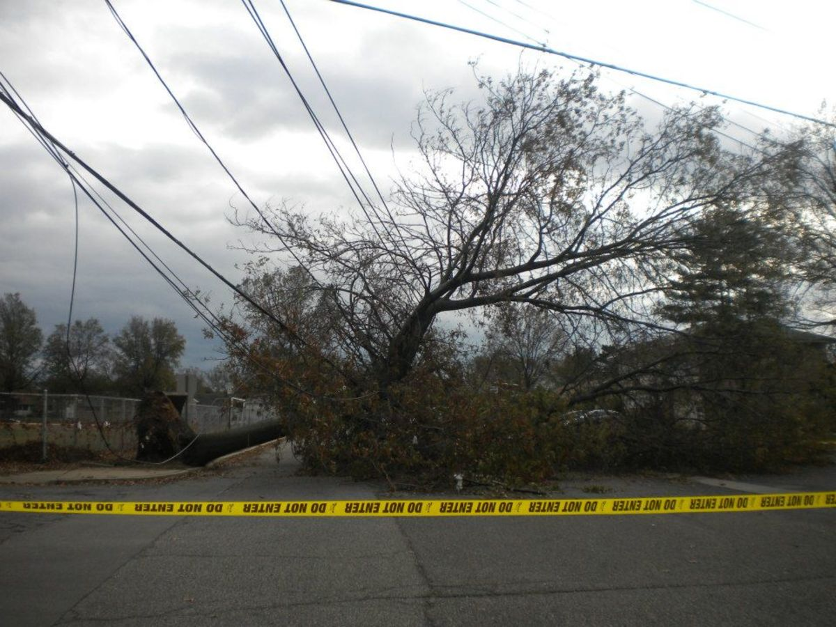 Trees took down power lines in Long Island, NY