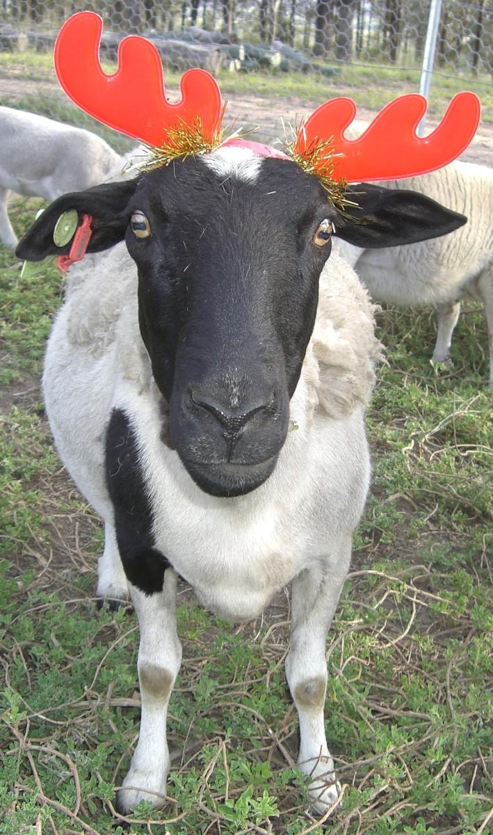 Ewe have yourself a merry christmas!