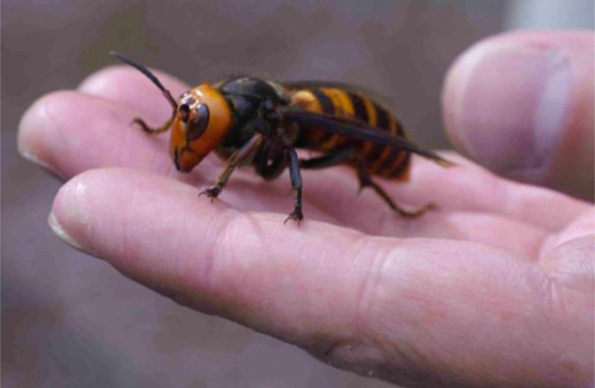 5-badass-bugs-that-you-should-have-nightmares-about