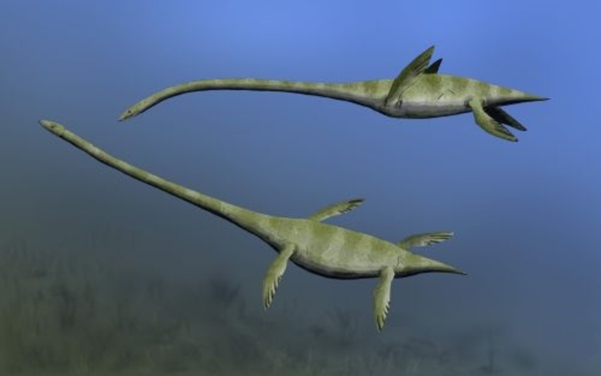 A restoration of Elasmosaurus.