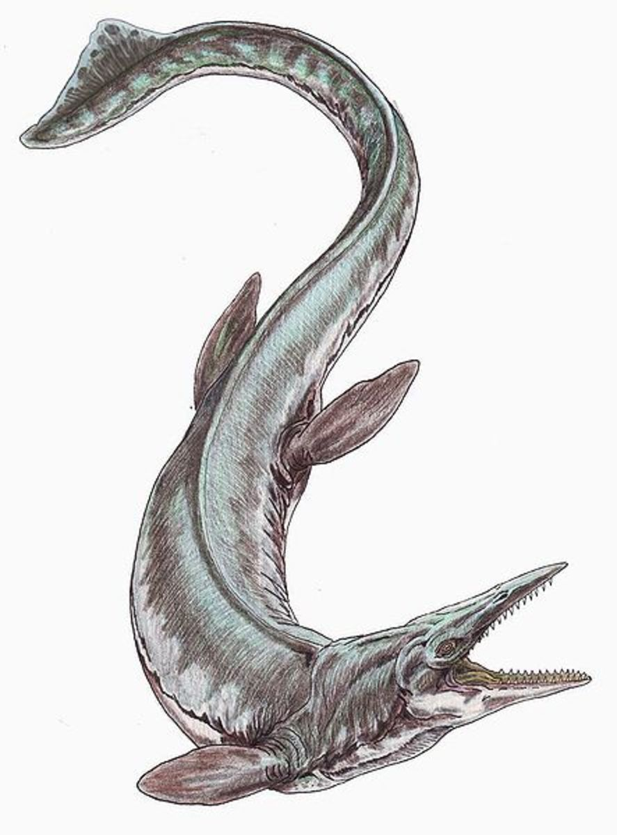 Tylosaurus, at 50 feet in length was among the biggest of the mosasaurs abroad during the Cretaceous Period.