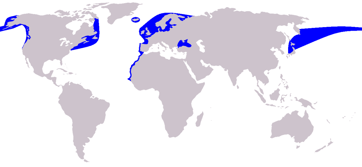 Distribution of the harbour porpoise