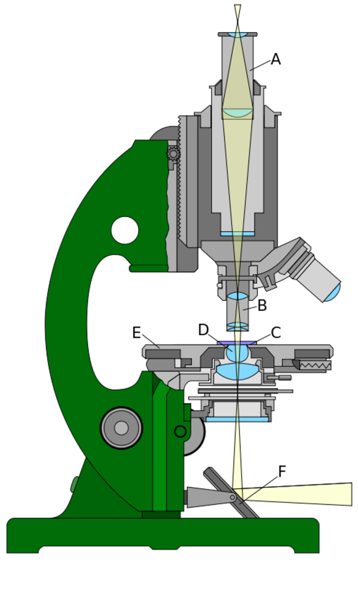 Light path in a light microscope. A - Eyepiece lens; B - Objective lens; C - sample; D - Condenser lenses; E - Stage; F - Mirror