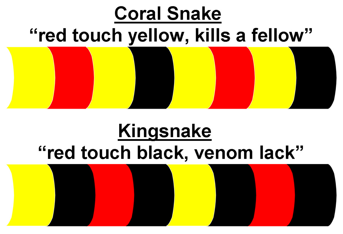 "Comparing deadly Coral Snake and harmless Kingsnake color-ring patterns.  The yellow color may, on occasion, be substituted for a white color.  These generalizations do not account for the very rare ""mutant"" snake."