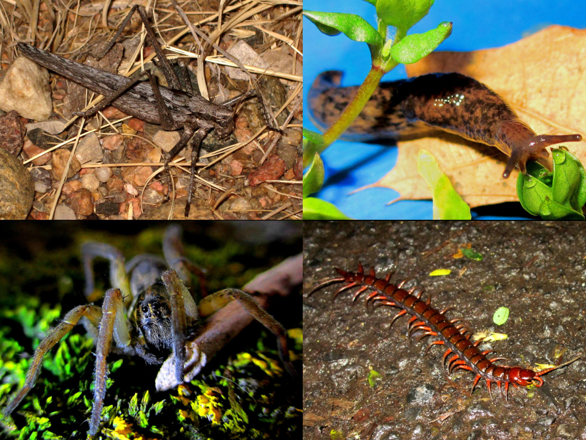 In addition to rodents, snakes consume a wide variety of species that humans often consider as pests, such as Grasshoppers, Slugs, Spiders, and Centipedes.  This behavior works for, not against, human economies.