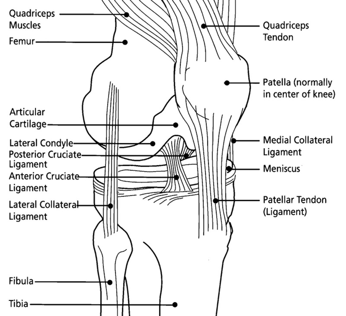 Diagram of the anatomy of the knee