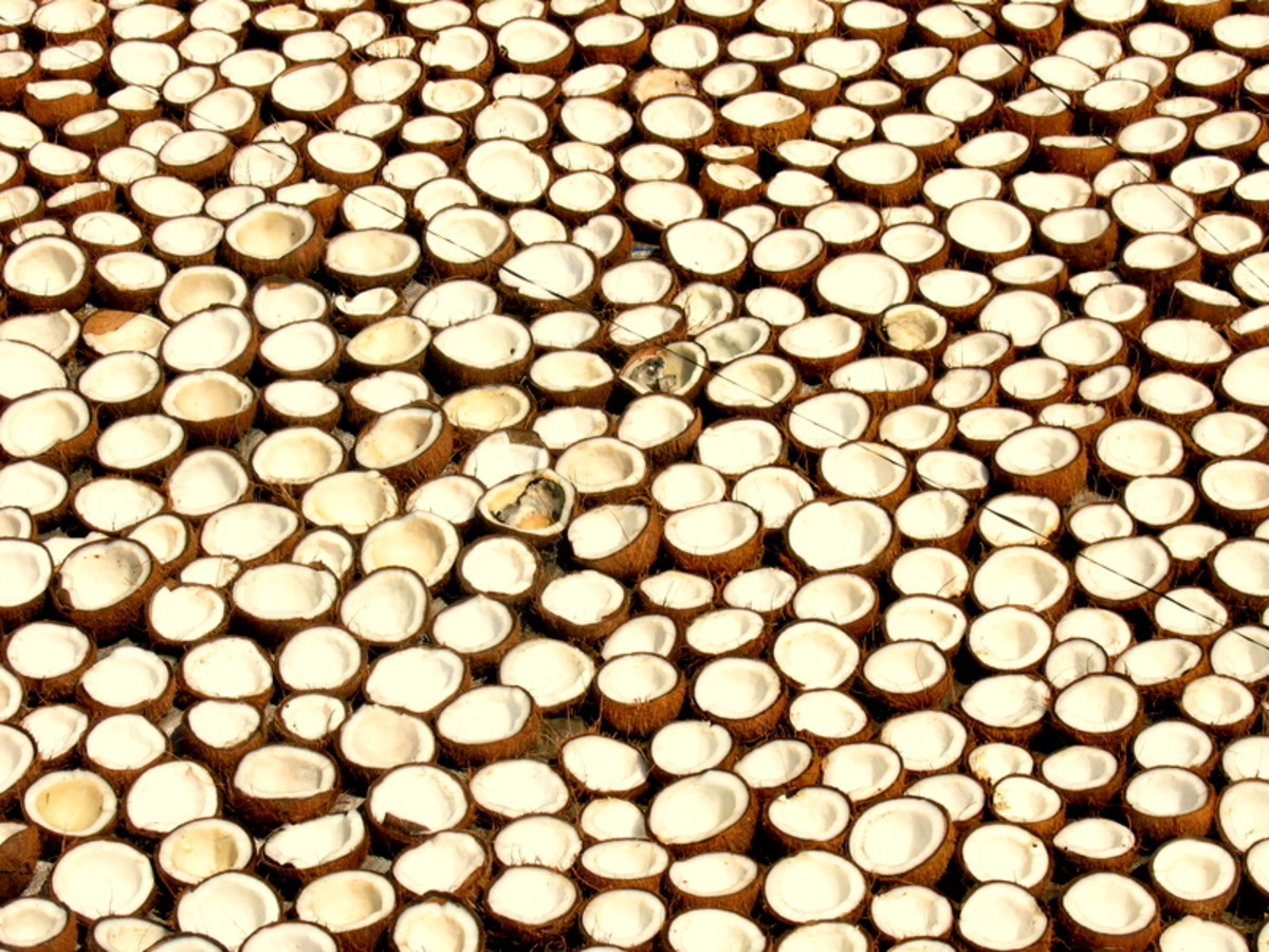 Coconut Oil production in Kerala, India.