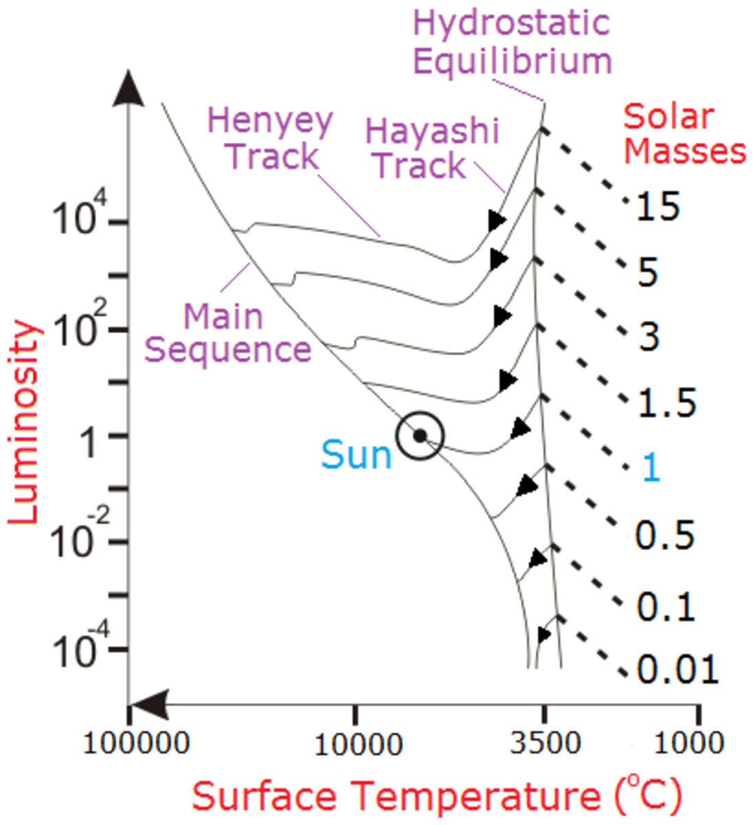 The early evolution of the Sun from protostar to main sequence star. The evolution of heavier and lighter stars are compared.