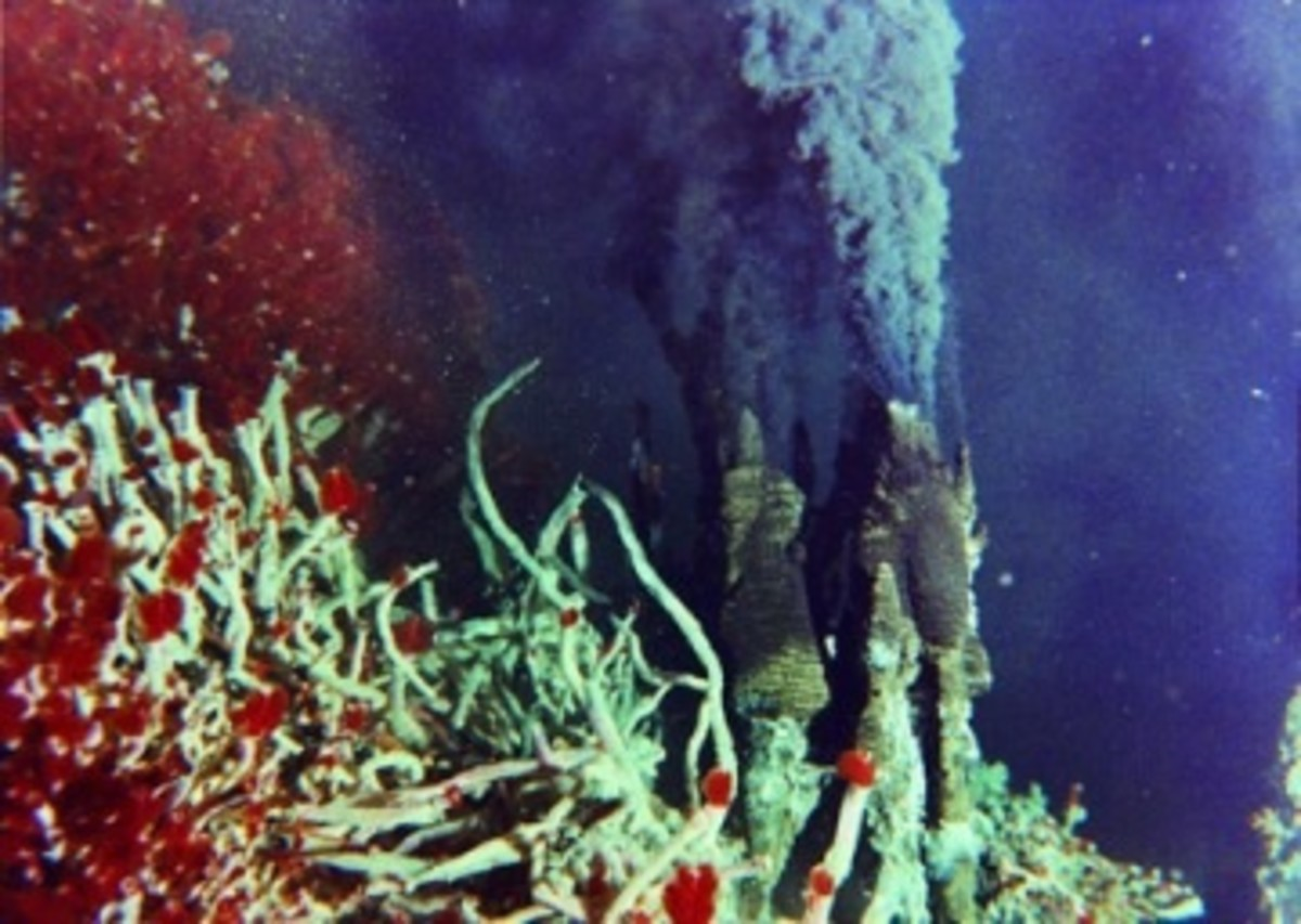 symbiotic relationship between chemosynthetic bacteria and riftia tubeworms