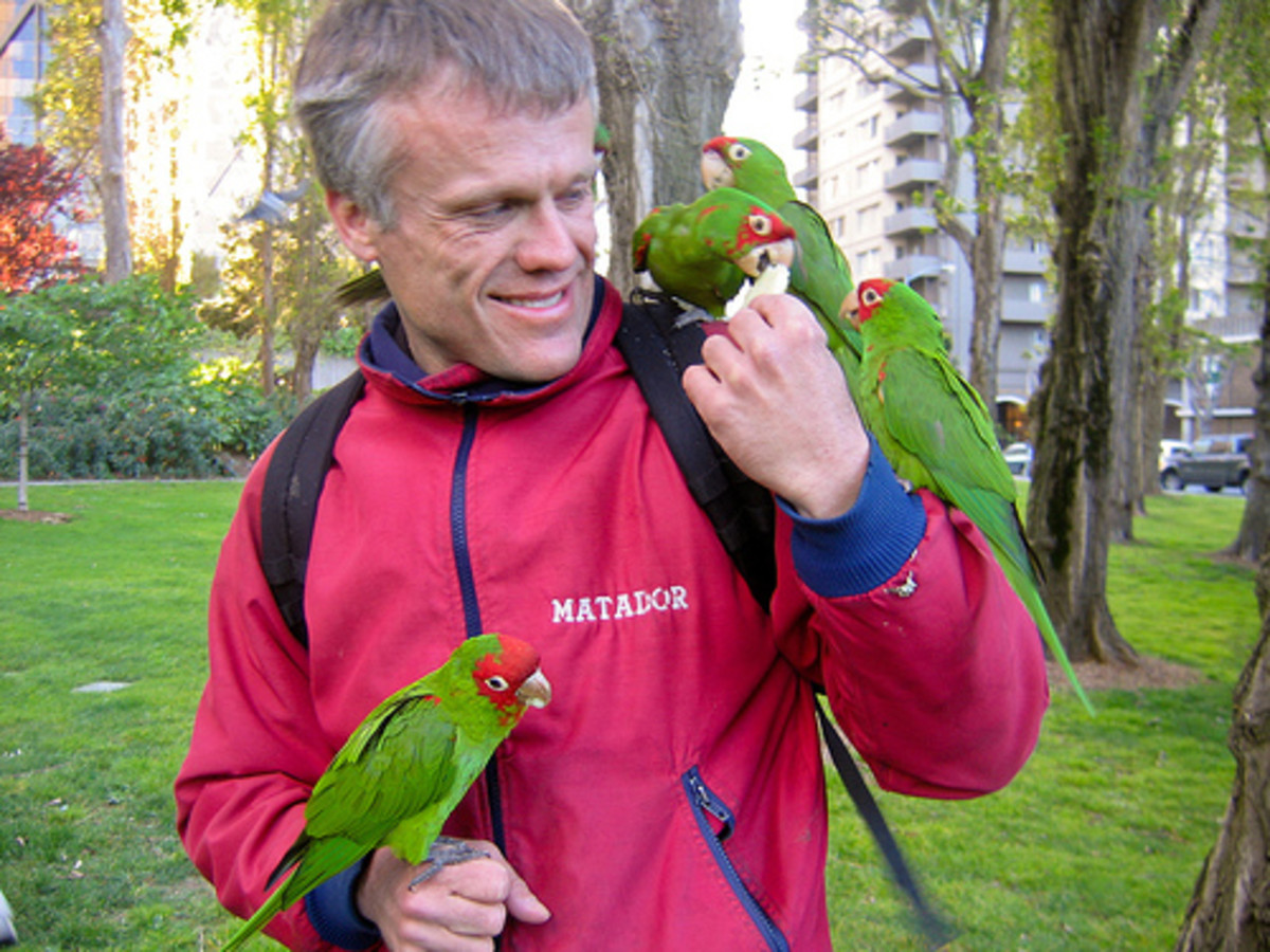 Parrots are very intelligent and adapt easily to interaction with humans, especially where they have taken to living alongside humans in urban parks.
