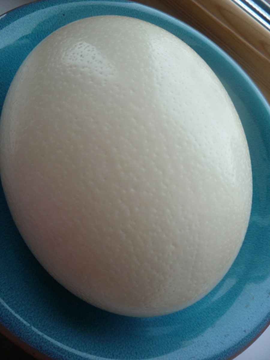 Ostrich eggs are big. Omelette anyone? Hey, invite the whole family!