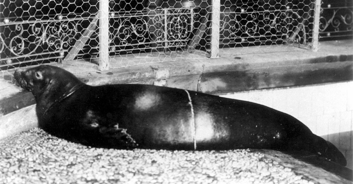The Monk Seal was officially declared extinct in 2008.
