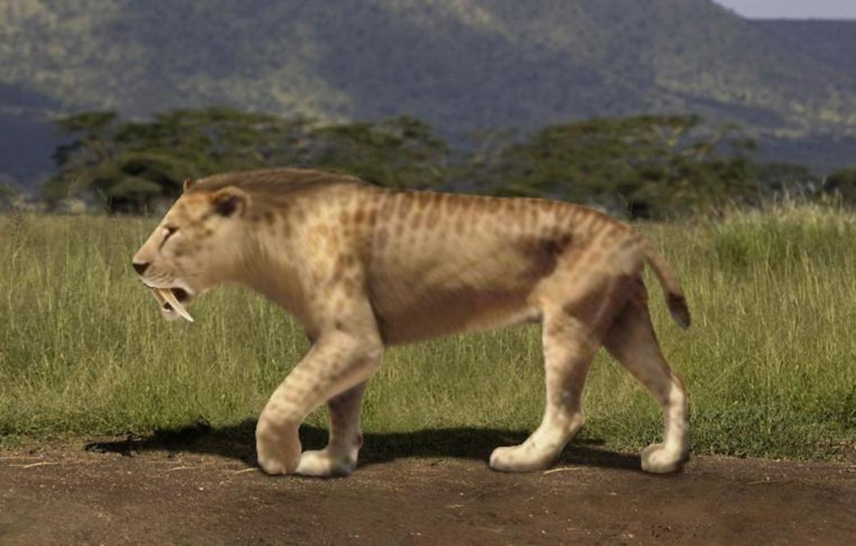 The Smilodon had huge canine teeth.