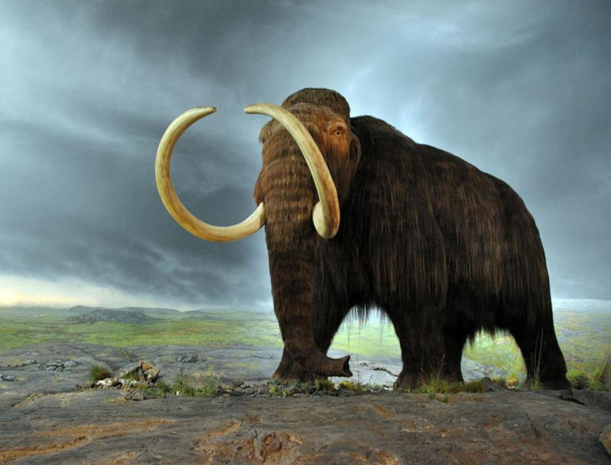 A model of the majestic Woolly Mammoth.