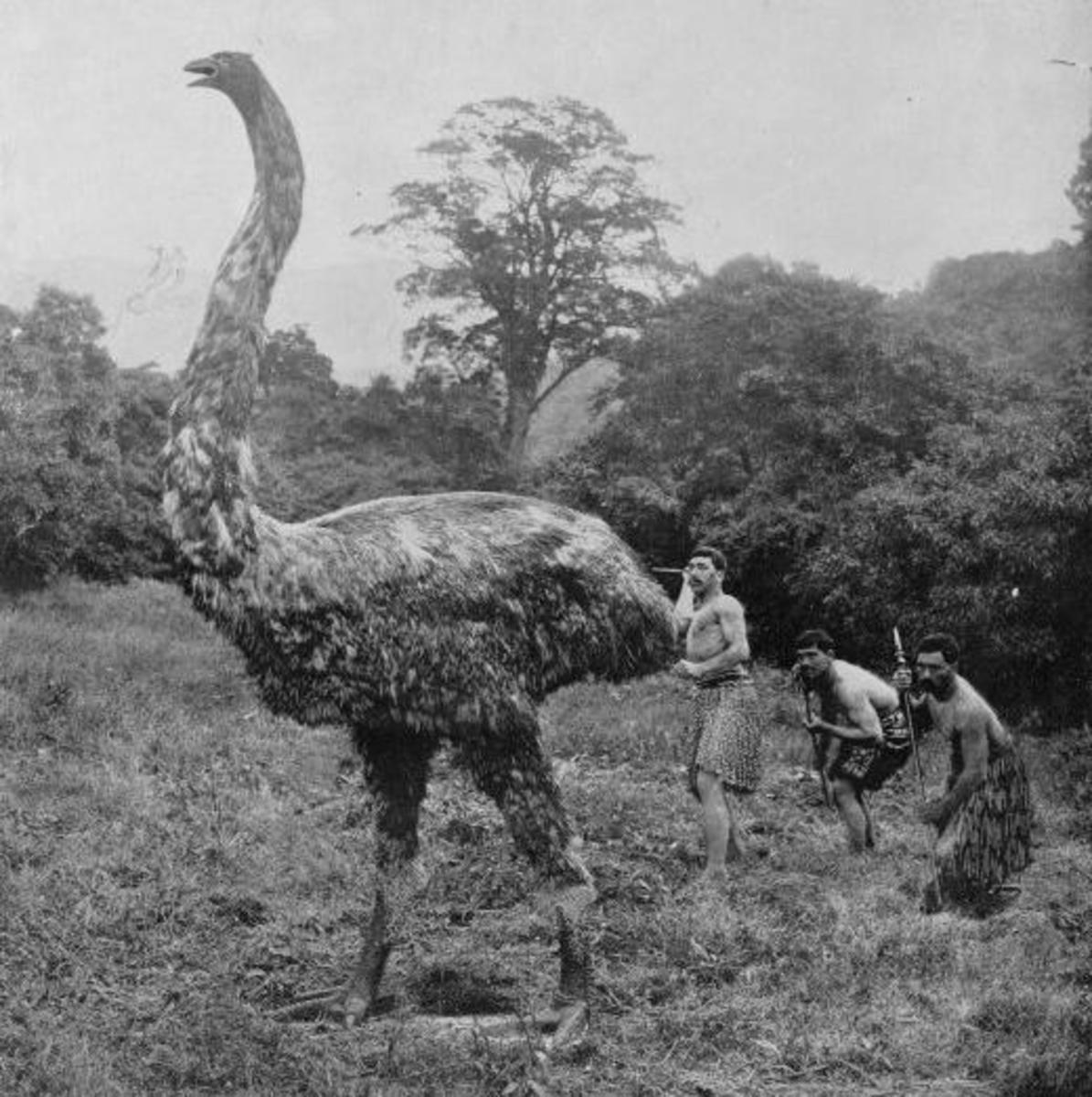 A reconstruction of a moa hunt.