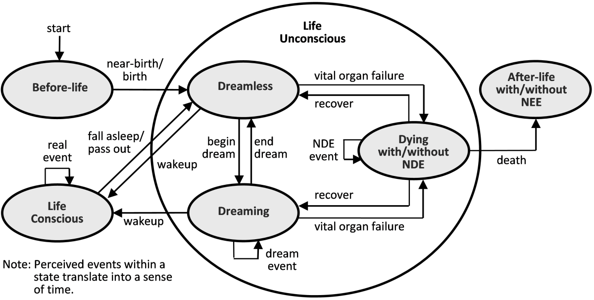 Major states and transitions in life--an abstraction where dreaming and the NDE are given more prominence. A state is represented as an oval and a transition as a directed line, labelled with an event that causes the transition.
