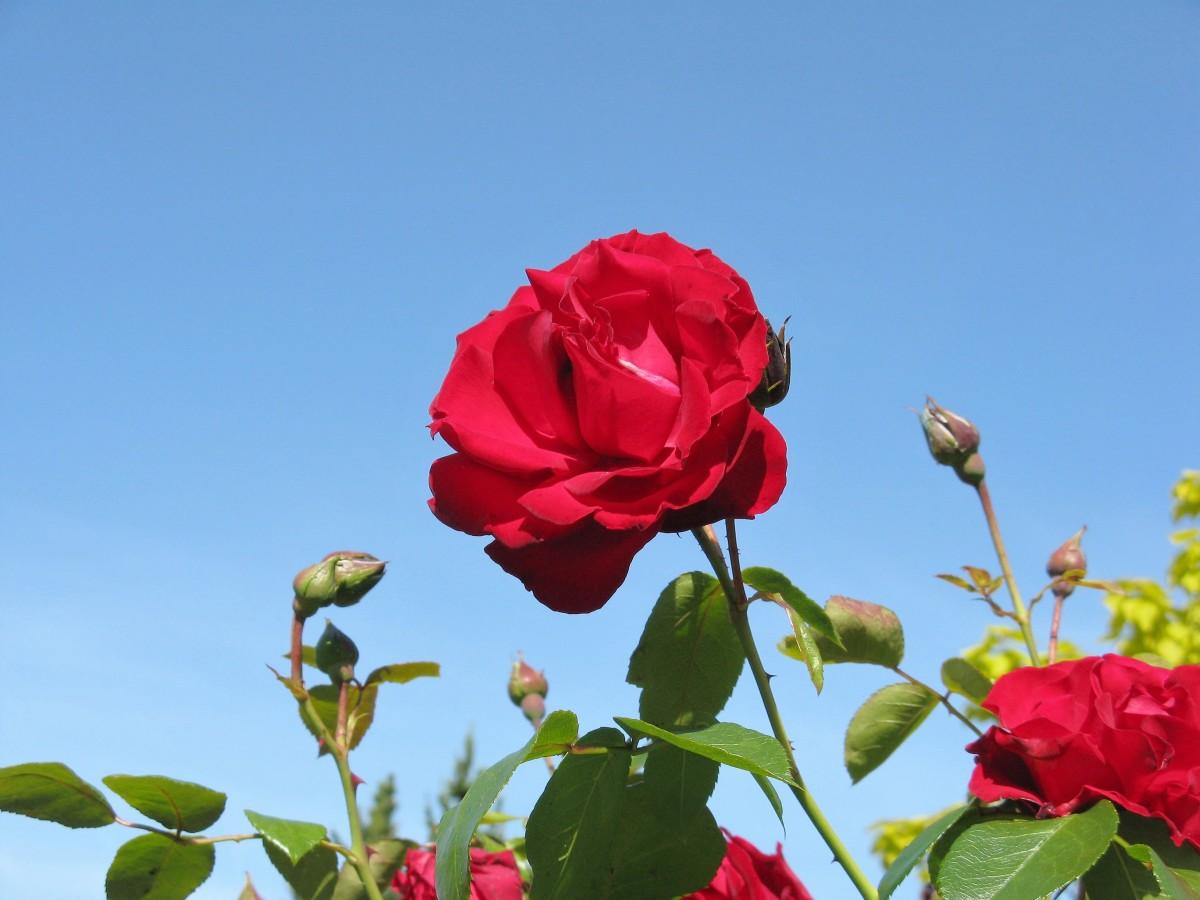 A beautiful blossom