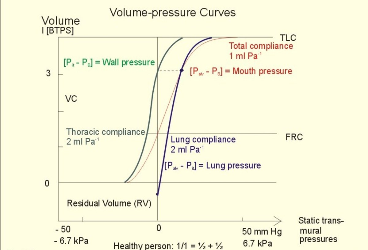 Lung Pressures And Lung Compliance Owlcation