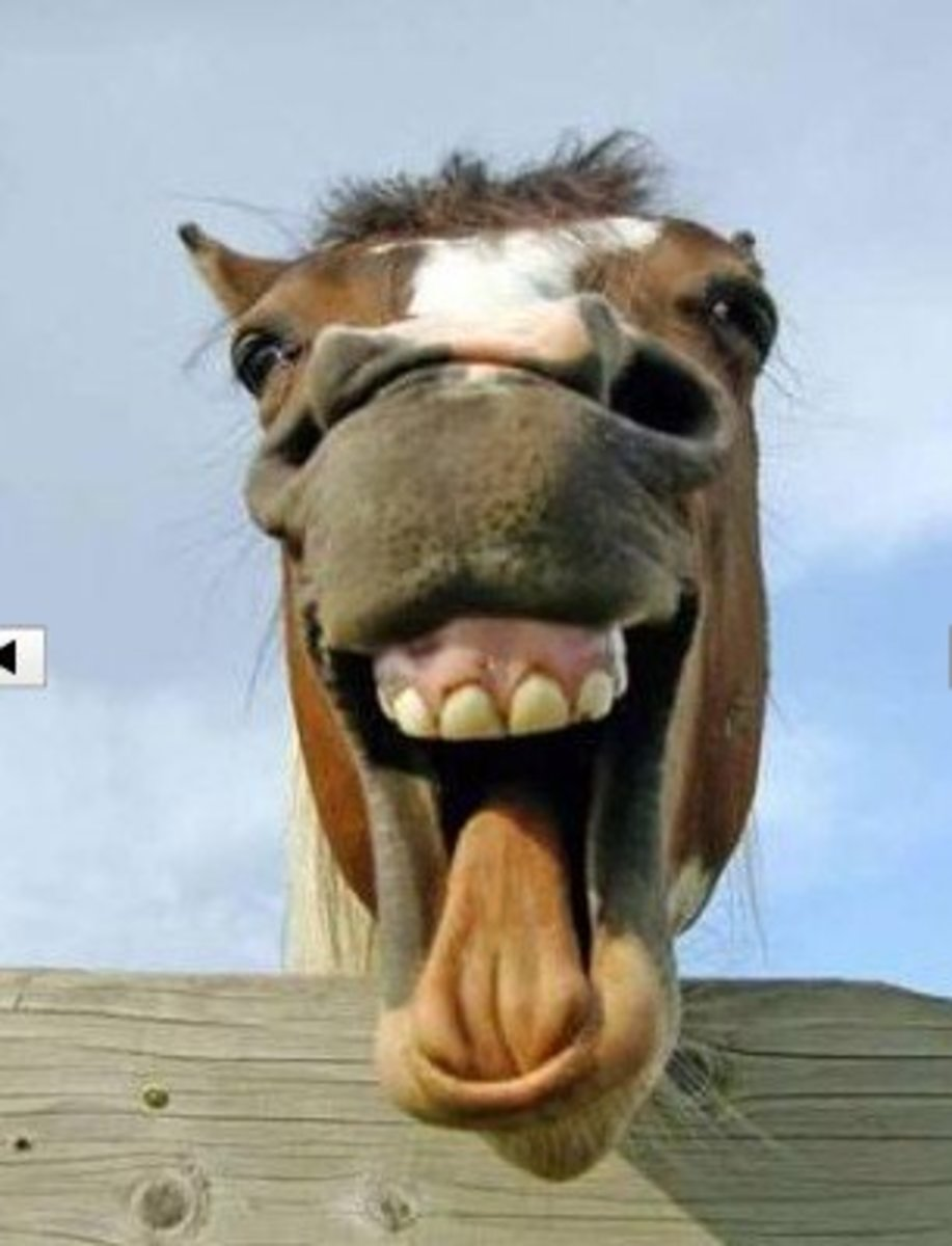 Meaning Of Can T Look A Gift Horse In The Mouth - Pictures of Horses