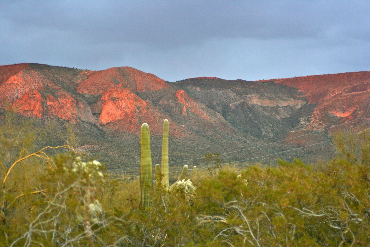 The view from my backyard:  home to a roadrunner, here and there, and a lot of rattlesnakes.