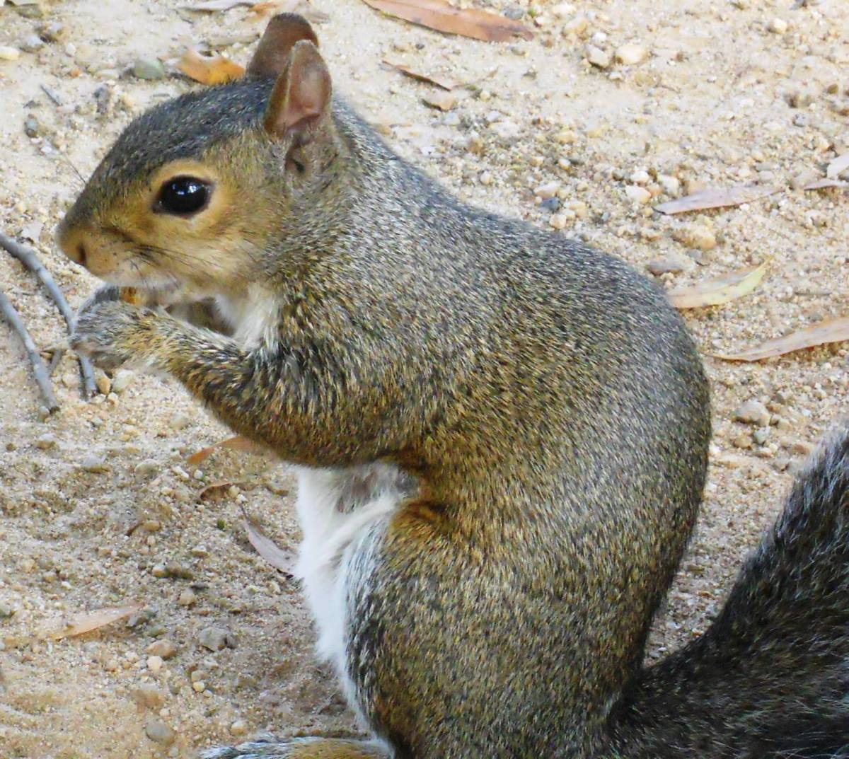 Lessons Learned from a Squirrel