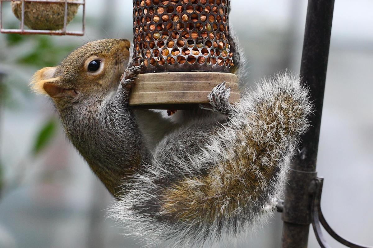 Embrace the struggle.  Squirrels are as adaptable as they are cute.