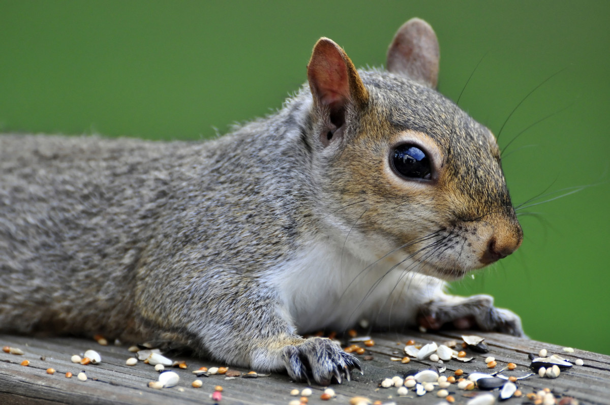 Take time to chew on information.  Be more like a squirrel.