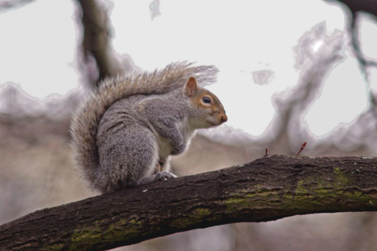 This squirrel uses his versatile, bushy tail to shield himself from inclement weather.