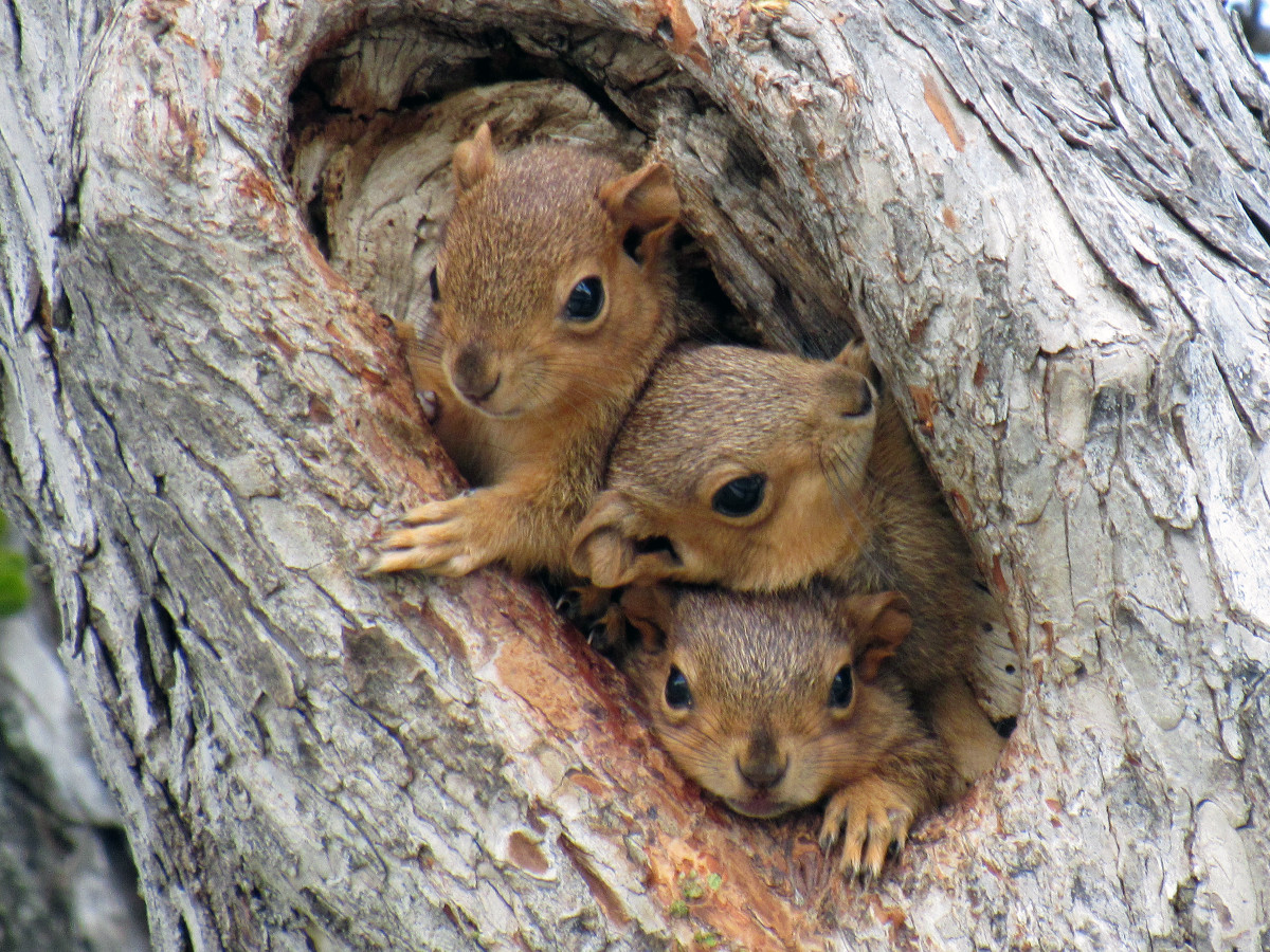 These cute baby squirrels look cozy but do they have an escape hatch?