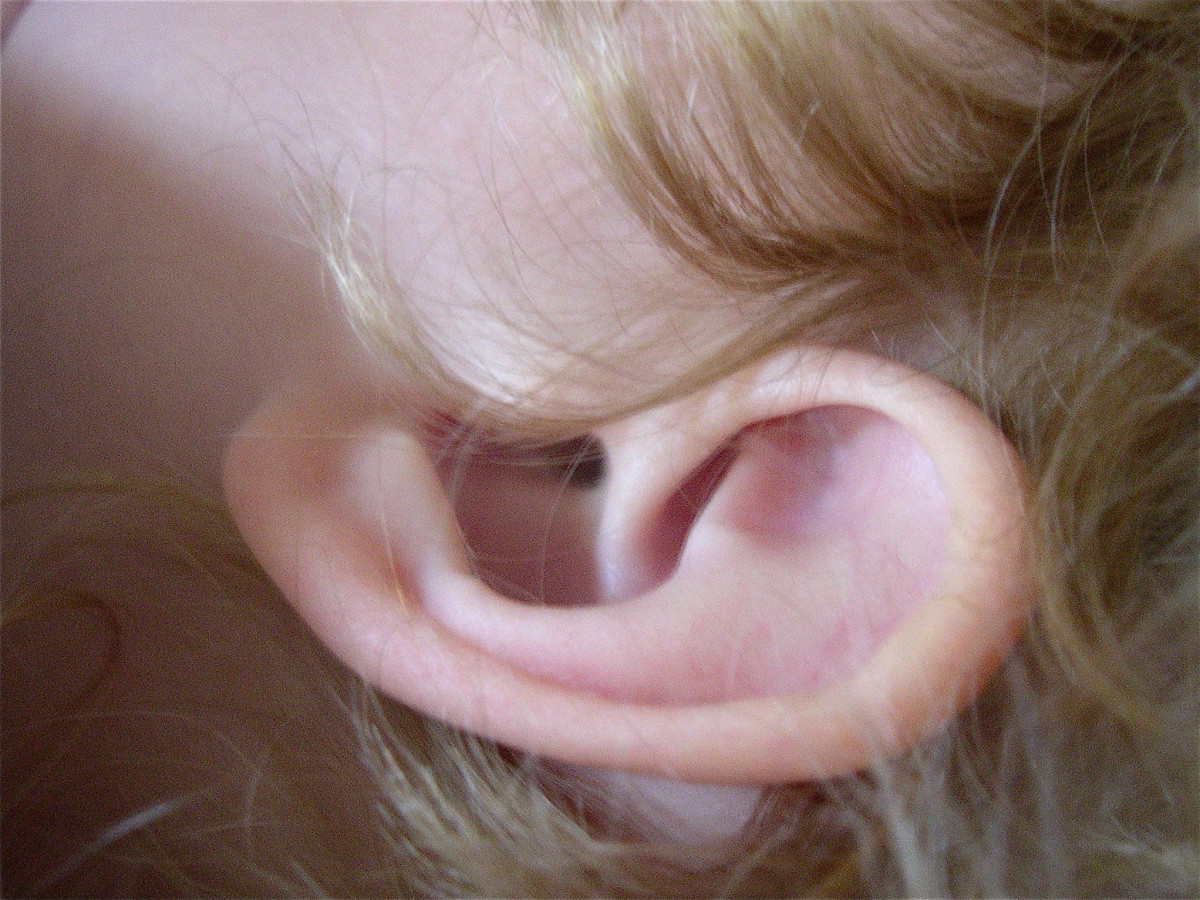 The pinna and the entrance to the auditory or ear canal in a baby