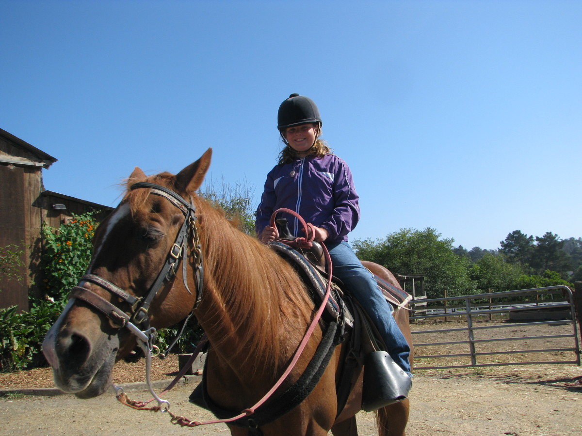 Why do young girls get so attached to horses?