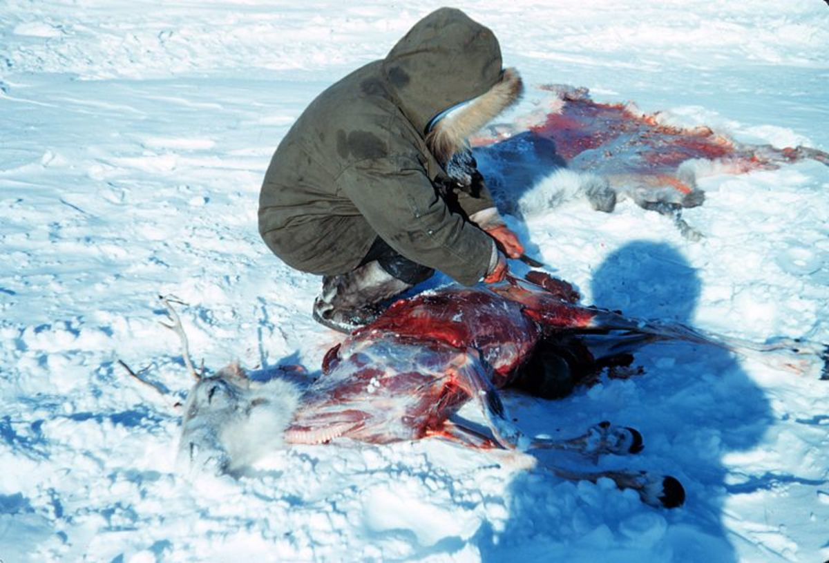 Subsistence hunter butchering a caribou, 1949.  Photo by Harley, D. Nygren, courtesy Wikimedia Commons.