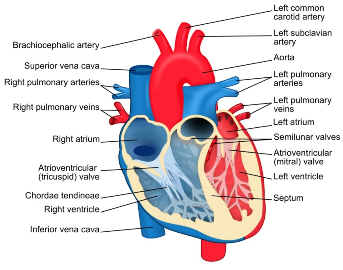 People receiving a heart transplant are often given cyclosporine to reduce the chance of rejection.