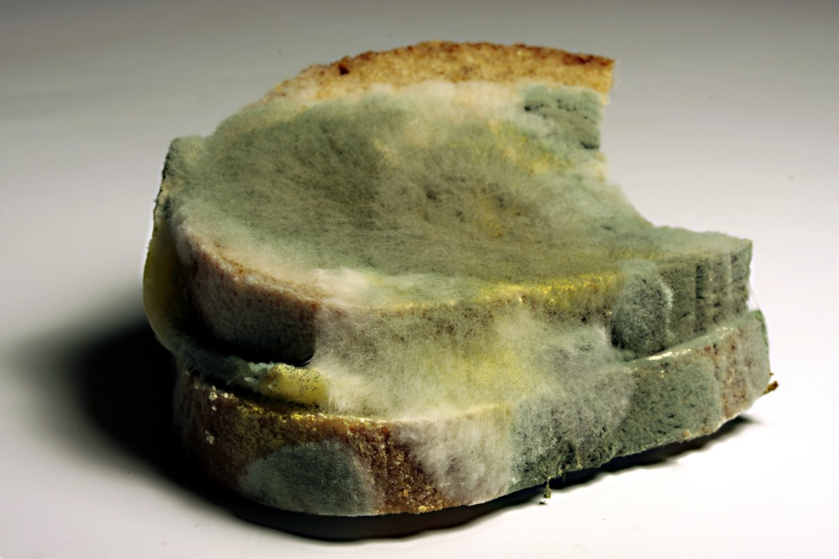 Mold growing on bread