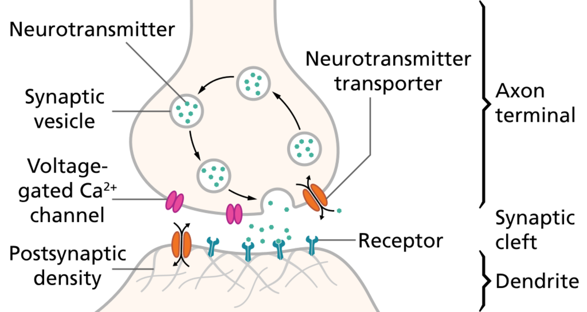 Ziconotide inhibits the voltage-gated calcium channels that are involved in synaptic vesicle movement. The vesicles normally release neurotransmitter molecules into the synaptic cleft.