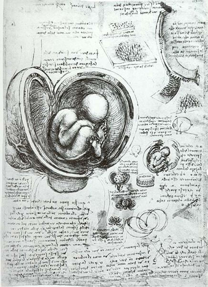 Leonardo's Drawing of Baby in the Womb