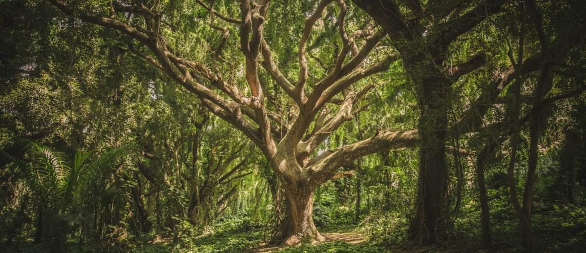 The Tree - A Short Story