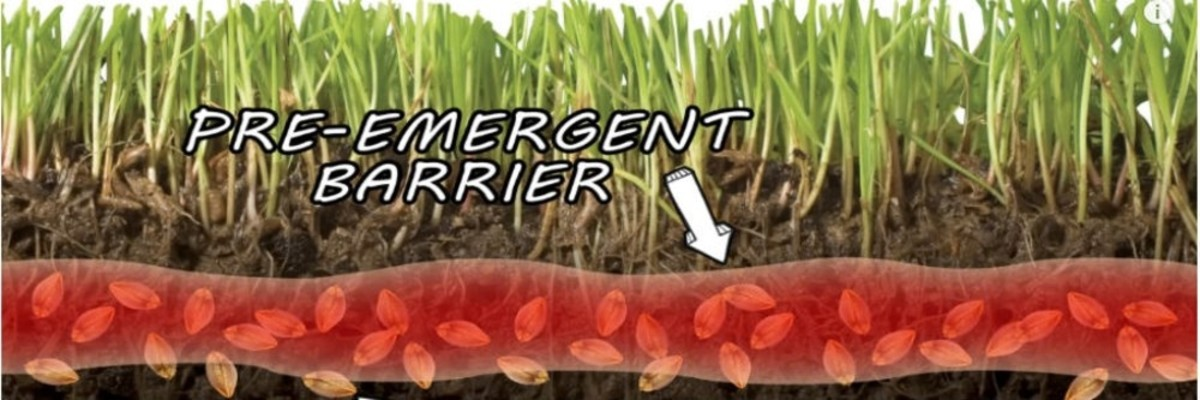 Preemergent herbicides must be in place before crabgrass seedlings and other weeds begin to emerge. Most will not kill crabgrass that has already emerged; they have to be applied and watered in to develop that herbicide barrier.