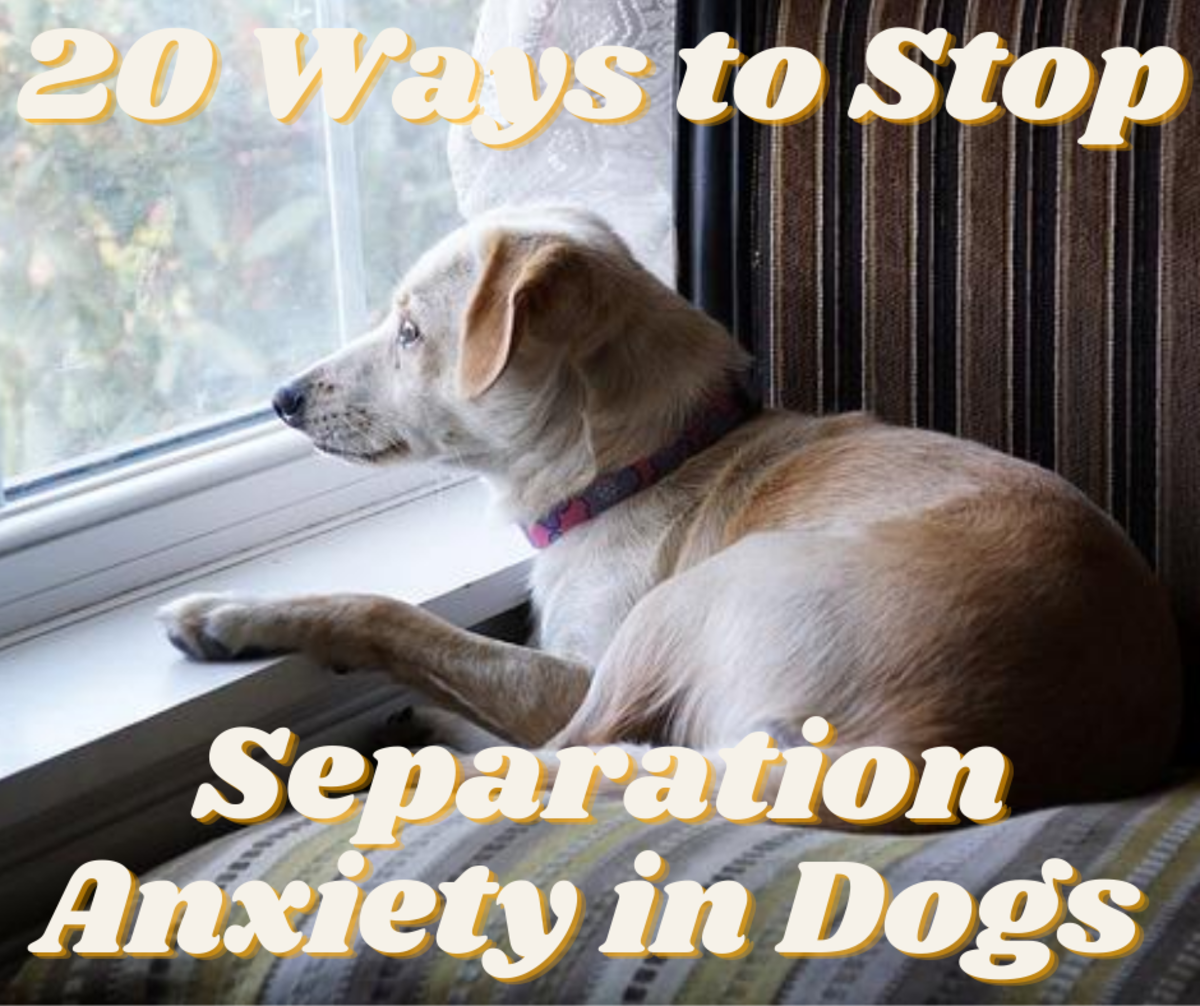 How Do You Stop Separation Anxiety in Dogs?
