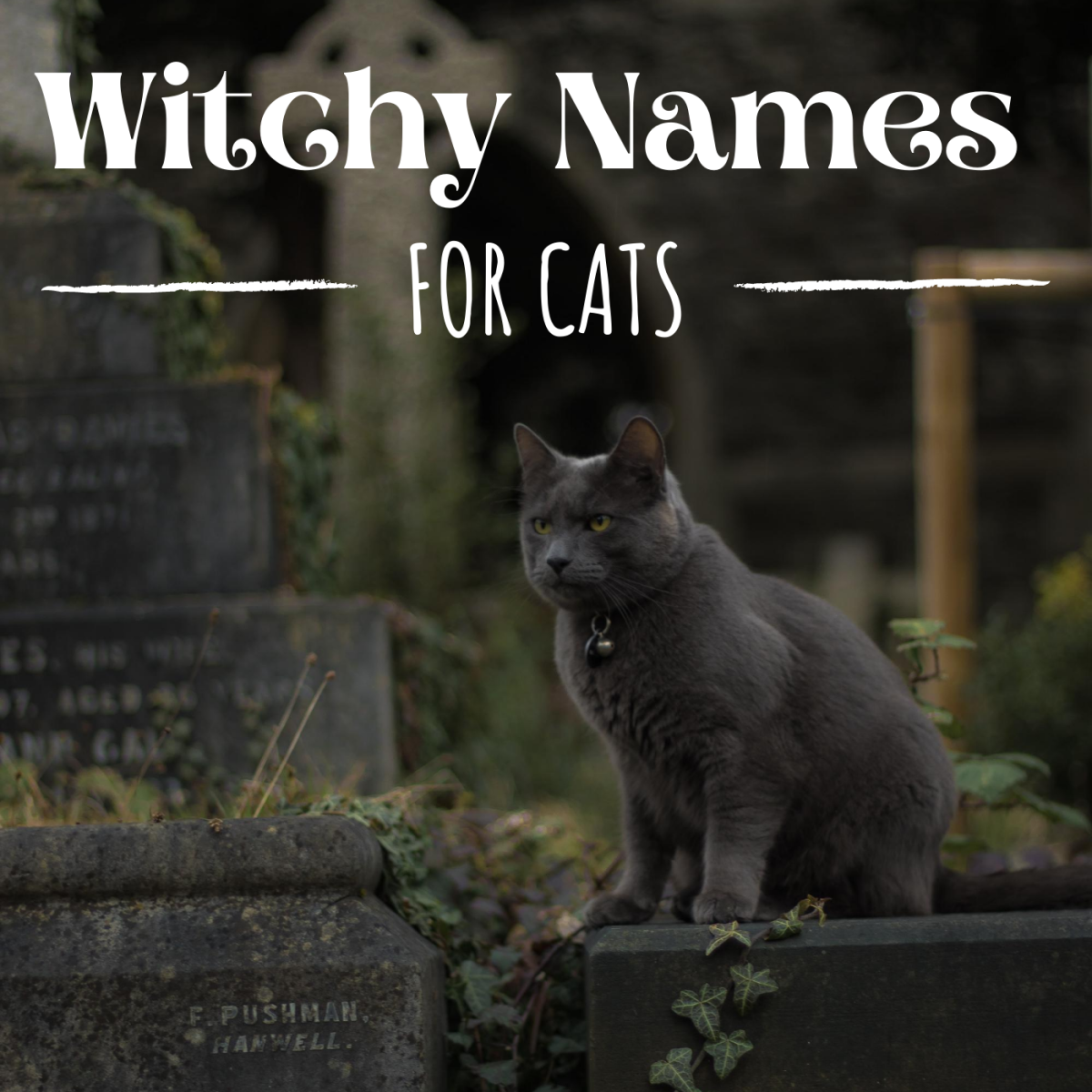 Looking for the perfect name for you spell-casting cat companion?