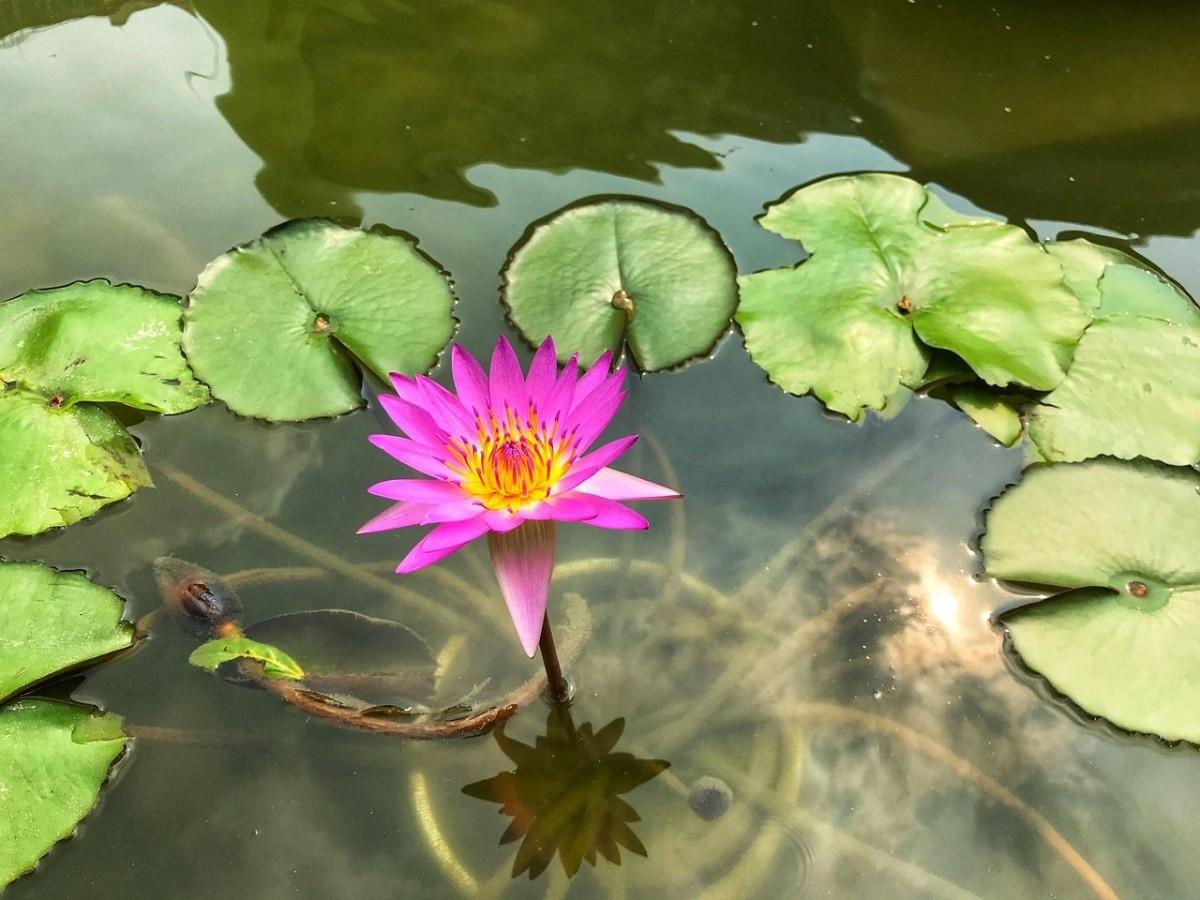 Enjoy the beauty of a water garden!