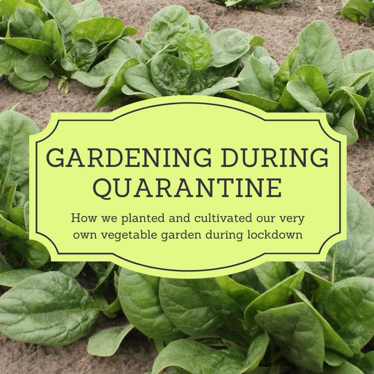 This article will share our family's process of starting a vegetable garden during the COVID-19 global pandemic.