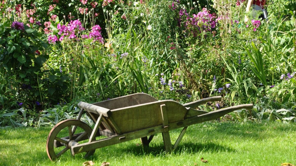 This article will offer some tips and tricks for having a greener garden next year.