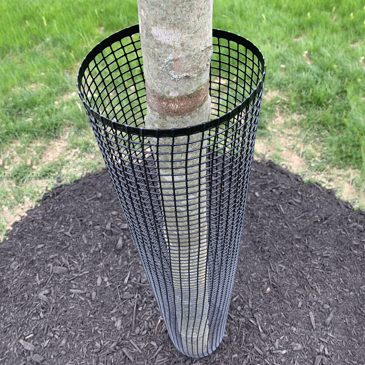 Tree guards will keep rabbits and rodents from chewing on the bark of your trees.  They are easy to use and available at almost all home and garden centers.