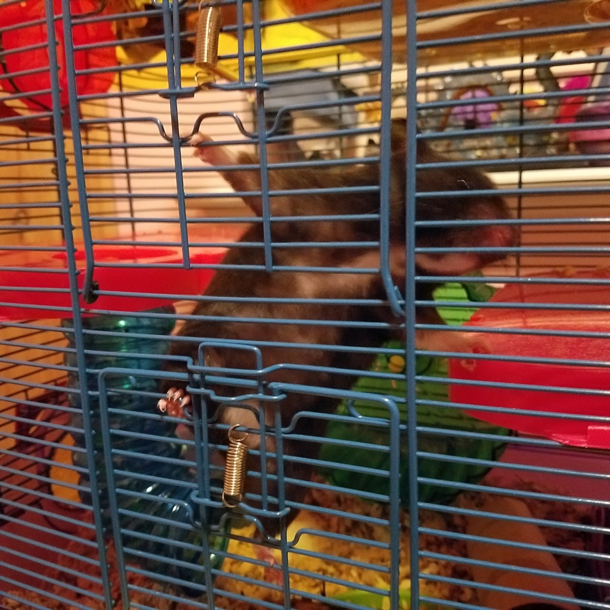 Sammy Bear is my daughter's hamster. This photo was taken the day she adopted her.