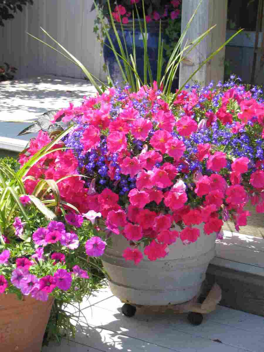 Healthy plants that look attractive will make sure your entrance or balcony is welcoming. These lovely summer plants make going up these steps a pleasure.