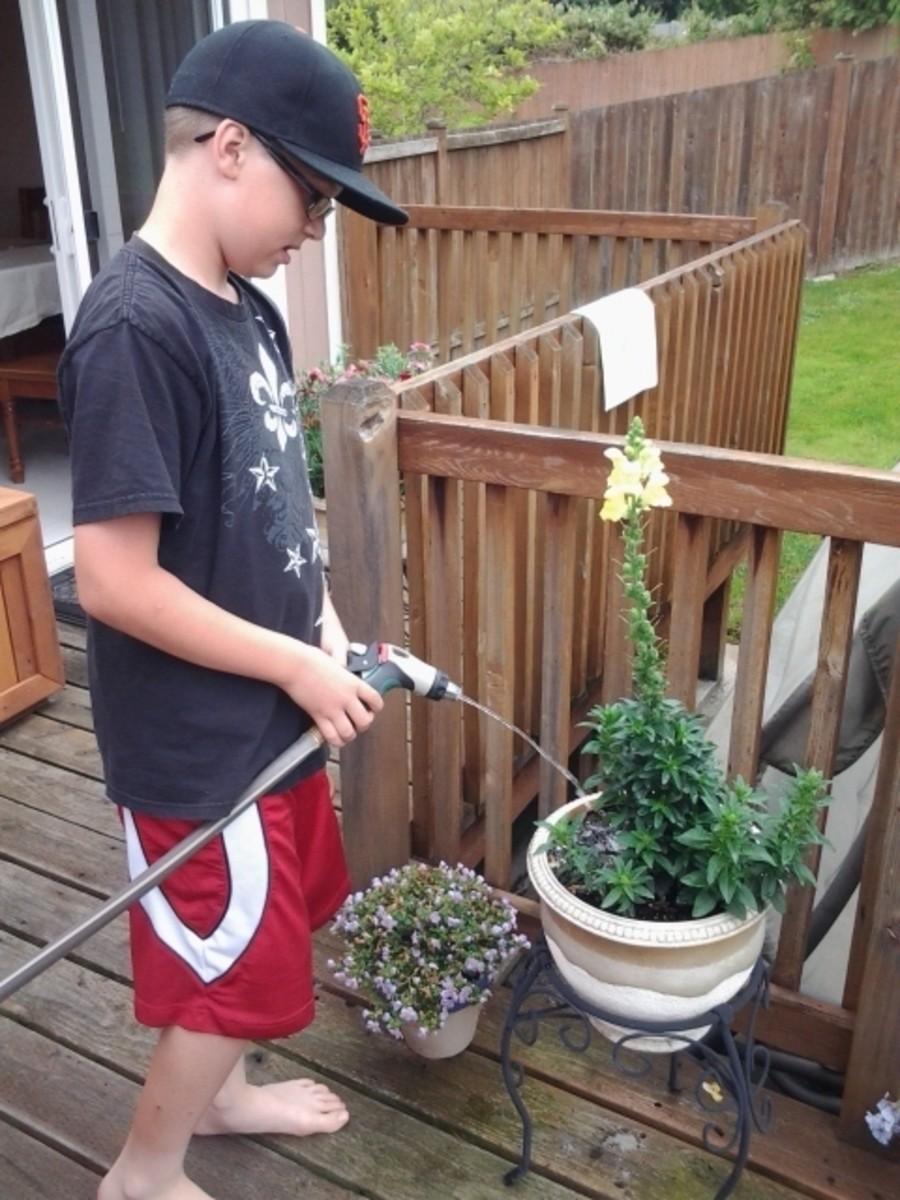 Boy watering the flowers