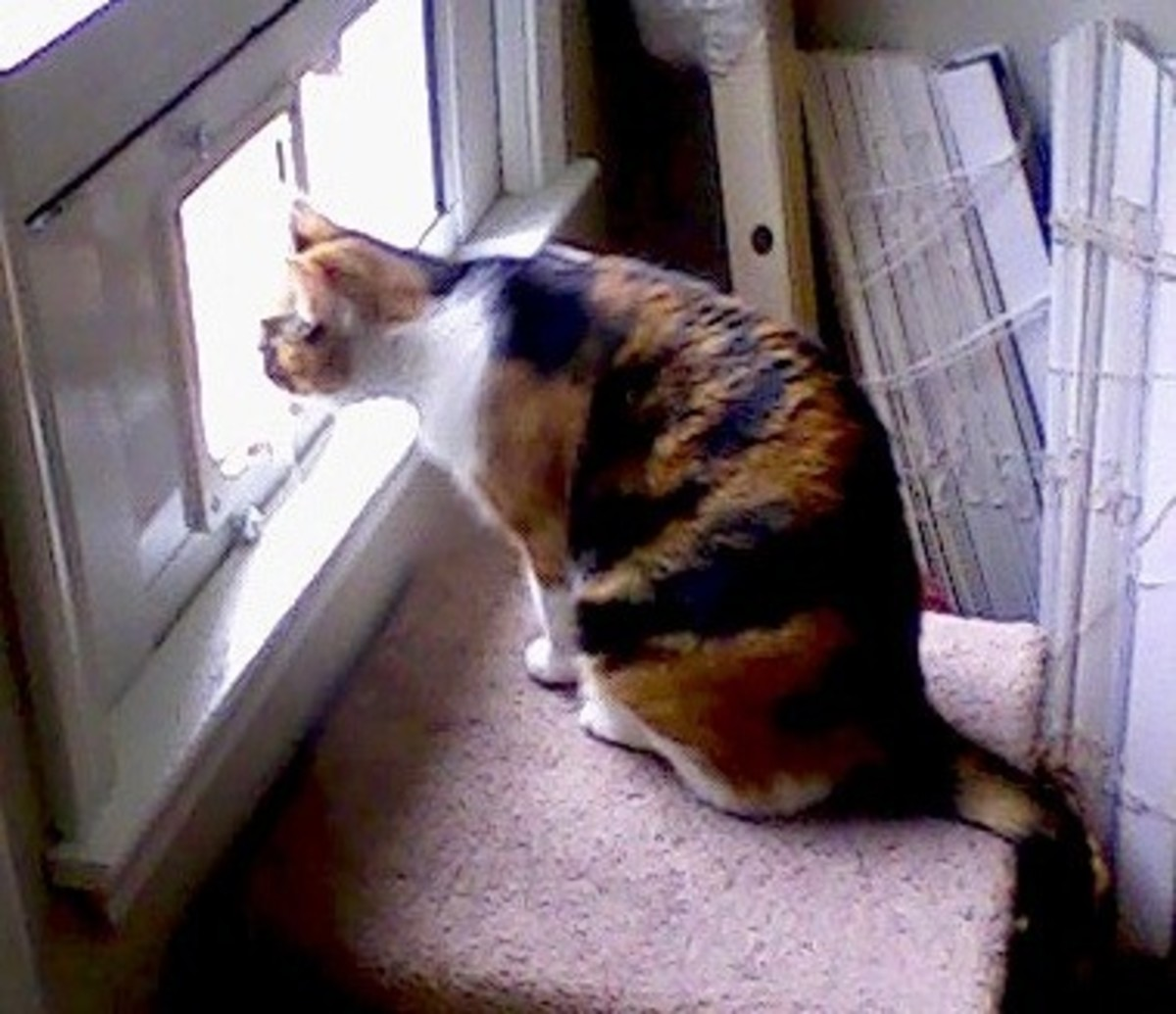 She's leaning toward the outdoors...